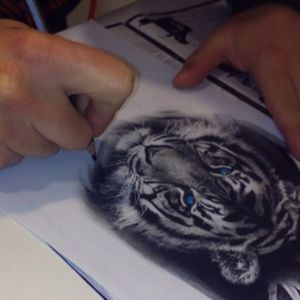 Drawing a tiger #realisticdrawing