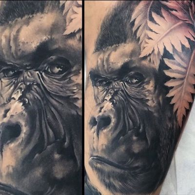 #healed #gorilla