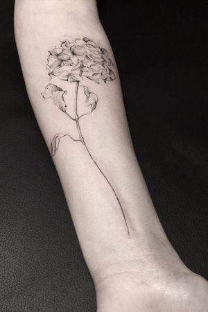 Botanical #flower #flowers #botanical #danilodelfino #fineline
