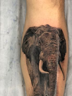 Rocked out this elephant on Mr Wilson .The shin is not a fun place to get tattooed .Thanks bud! #realismtattoo #blackandgreytattoo #tattoodo #taot #tattoofilter #tattoooftheday #tattooartistmagazine #tttism #eagleviewtattooproducts #blxckink #skinartmag #realistictattoo
