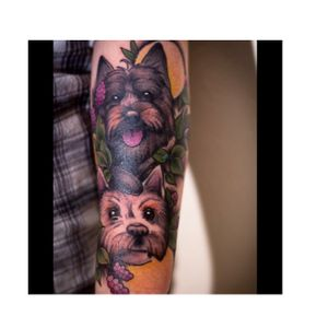 Neotradtional tattoo of both my cairn terriers 🐶 Tattoo by Cheis Stockings