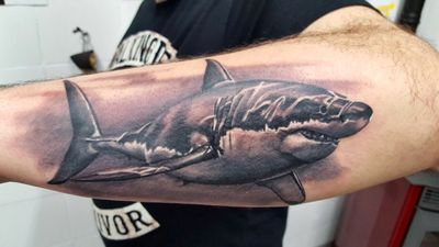 realism white shark @ l'eretica tattoo factory piancamuno italy made by artist luca merelli #shark #sharktattoo #realism #blackandgrey #italy #forearm #forearmtattoo