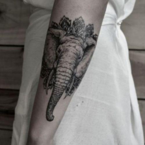 #elephant island