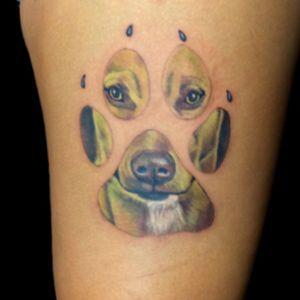 Color dog portrait
