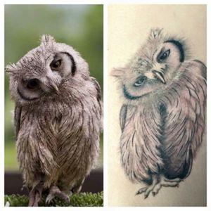 Owl... I love owls...