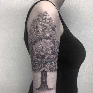 #tree #treetattoo #arbre #arbretattoo #dot #dots #petitspoints #dotwork #dottattoo #blackandgreytattoo #blackandwhitetattoo #lespetitspointsdefanny #tattoolausanne