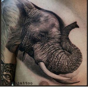 #CiglaTattoo #elephant #hyperrealism