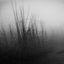Szogun Ciernistych Krzewów