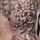 Wiwien Tattoos