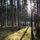 """Atelier """"Wald und Wiese"""""""